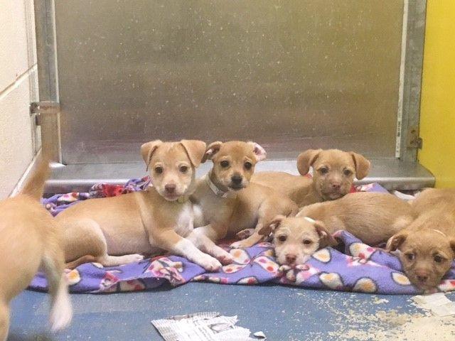 Puerto Rico Rescue - Southampton Animal Shelter Foundation