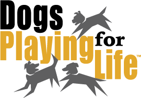 Dogs Playing for Life at SASF