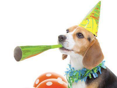 National Shelter Dog Birthday Celebration at South Fork Historical Museum