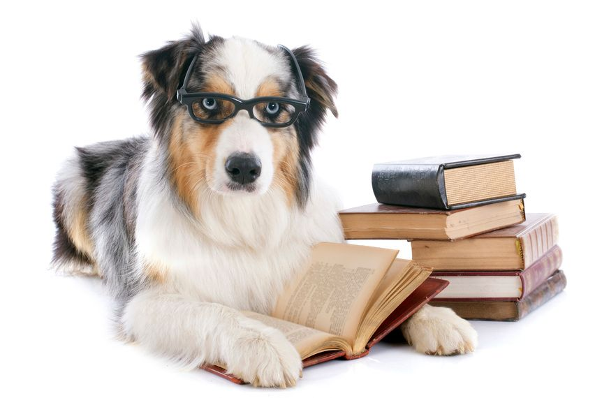 Dine, Dog, and Discuss - Westhampton Free Library