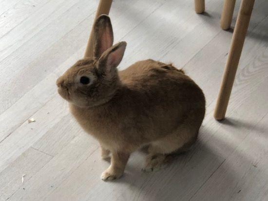 bunny bun rabbit
