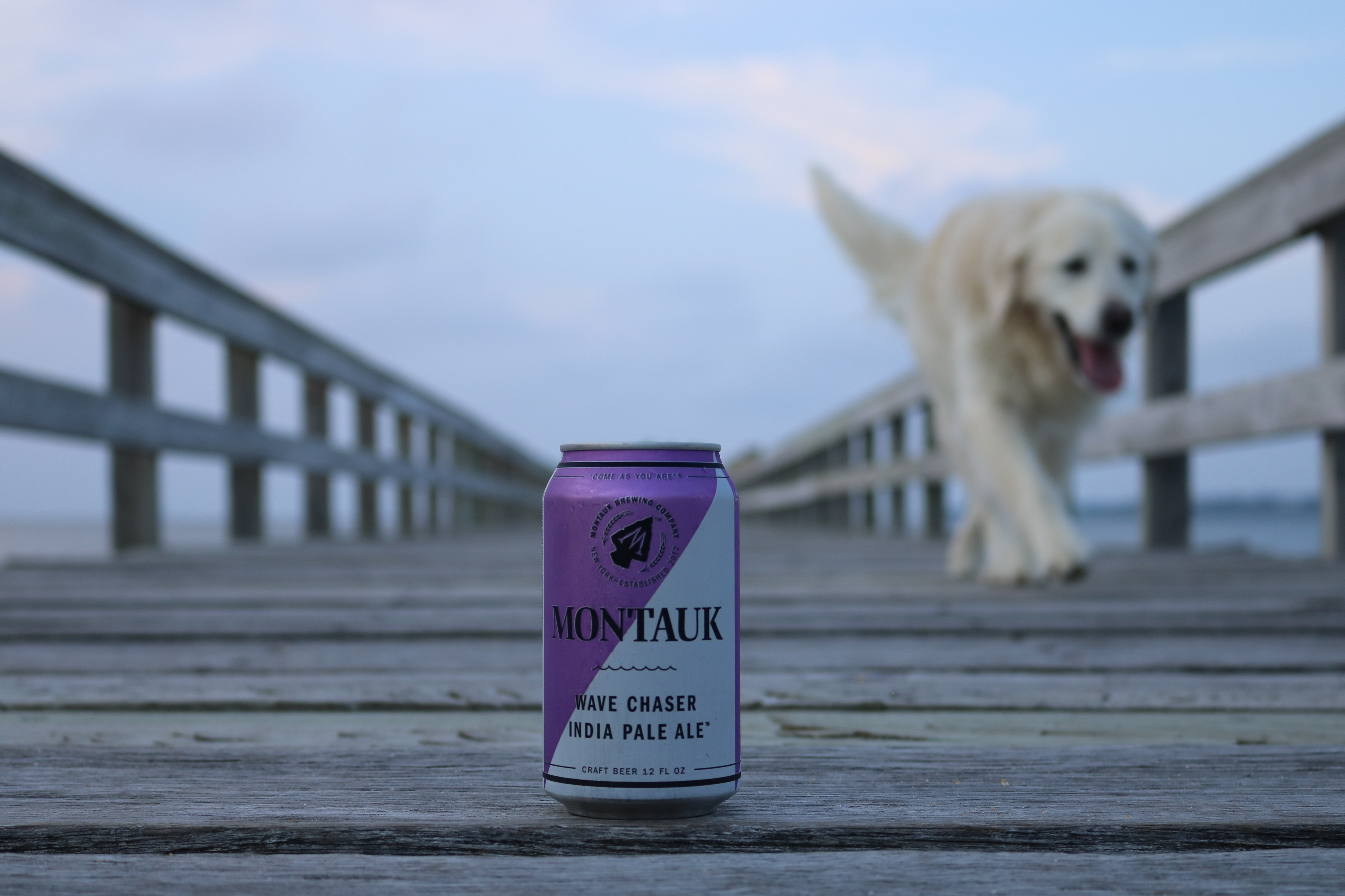 Pints for Paws Kick-Off at Montauk Brewing Co.