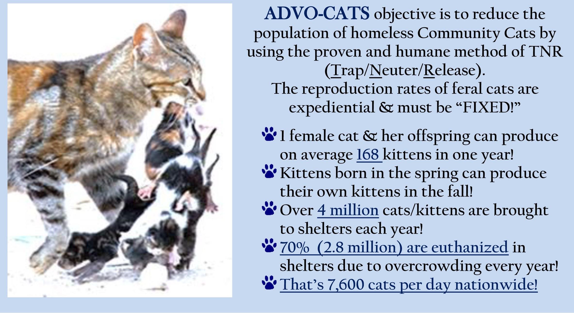Advo-cats stats+