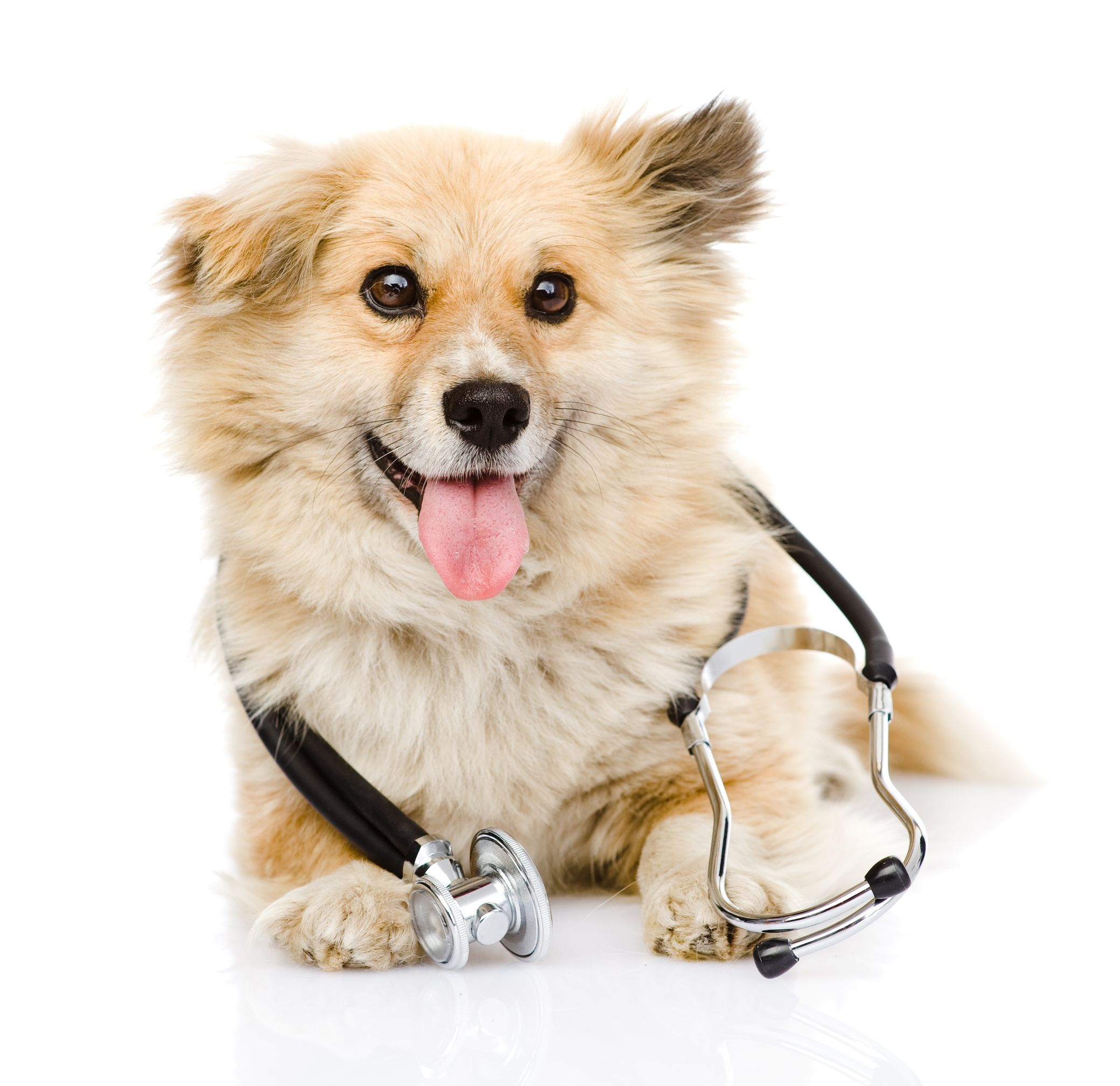 Wellness clinic mondays by appointment spay neuter clinic tuesdays by